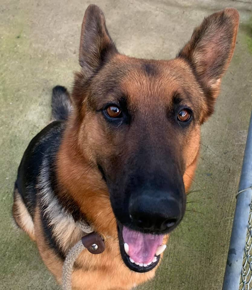 Featured Pet of the Week at the Clatsop County Animal Shelter
