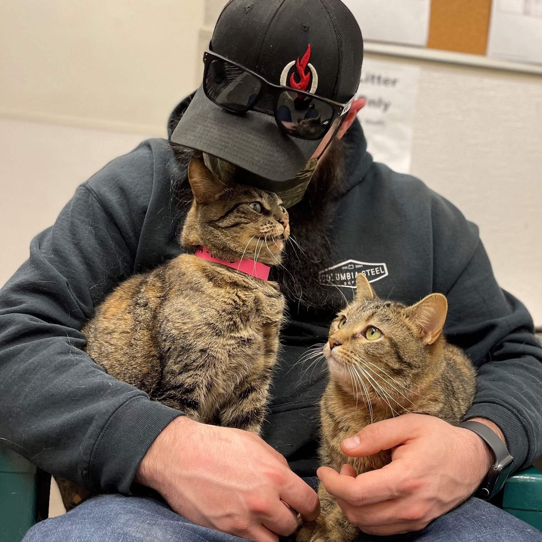 Featured Pets of the Week at the Clatsop County Animal Shelter