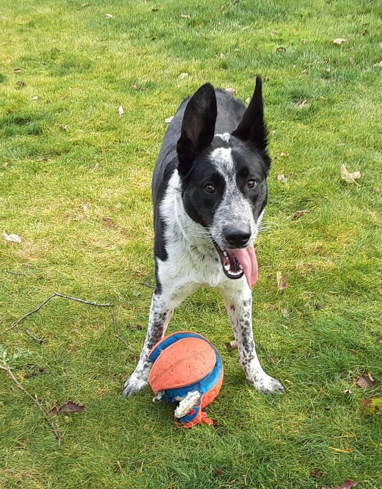 South Pacific County Humane Society Pet of the Week