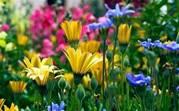 Nehalem Bay Garden Club Annual Plant Sale